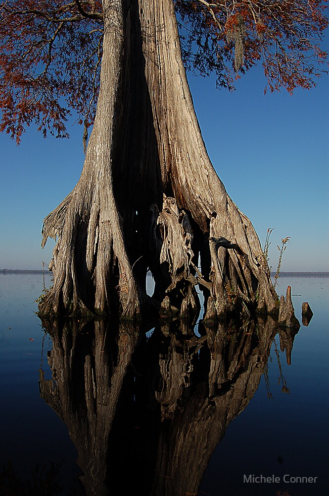 Bald Cypress by Michele Conner