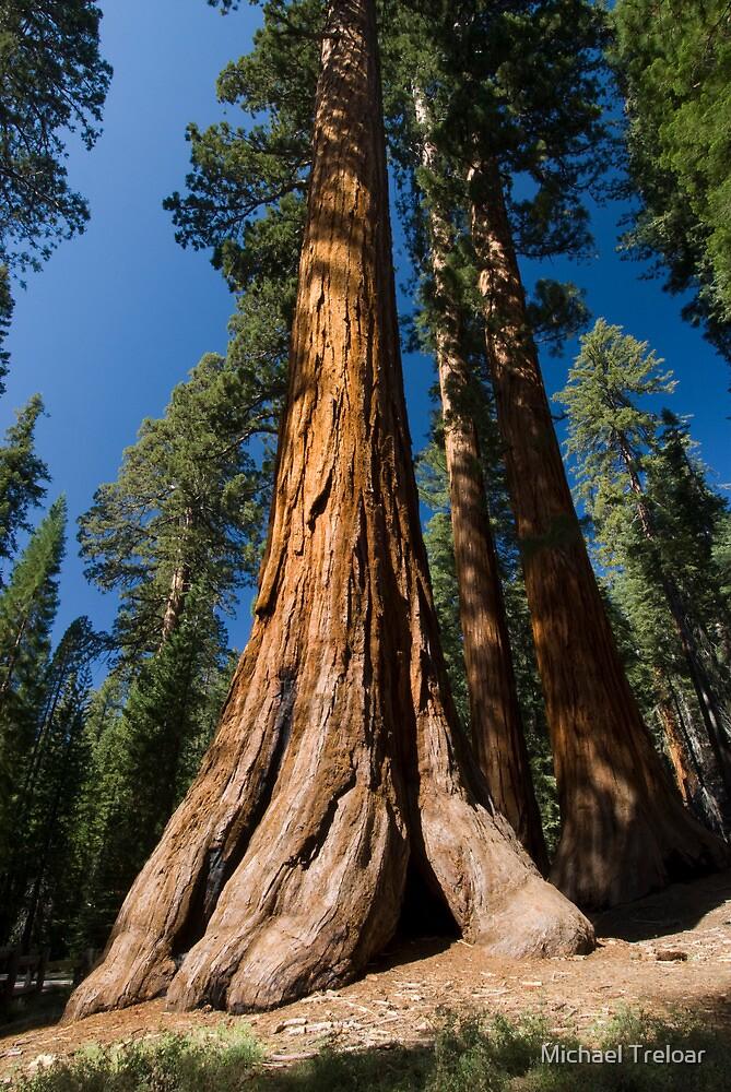Sequoia  by Michael Treloar