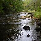 Rushing Streams on a Peaceful Day by dutchessphoto85
