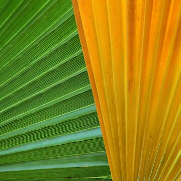 Palm Leaves by BuzzEdition
