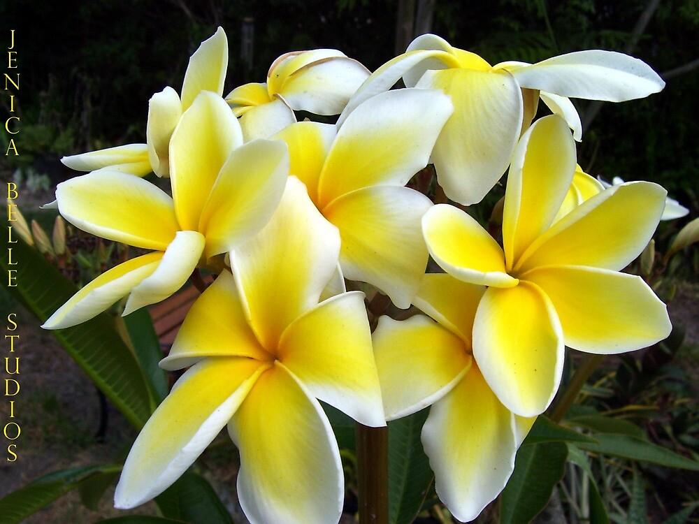 Sweet Tropics by JenicaBelle