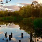 Evening Reflections by Carol Bleasdale