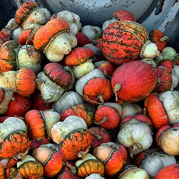 Colorful Gourds by Osso