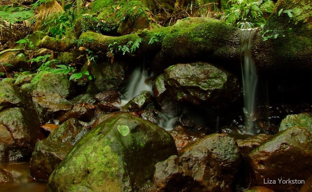 Tree root dam by Liza Yorkston