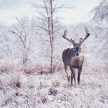 deer in the winter forest after snow storm  by svetlanna