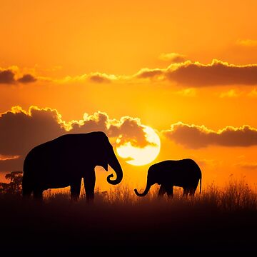 Mother and Baby Elephants at sunset by svetlanna