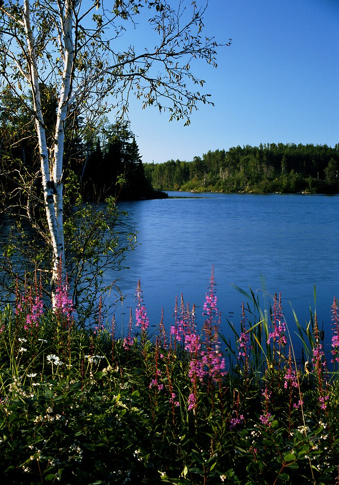 """""""  Fireweed  """" by fortner"""