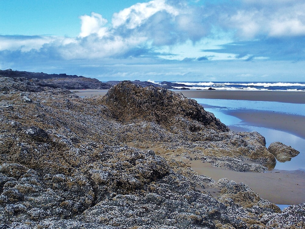 Mountains of Barnacles....Waldport, Oregon by Diane Arndt