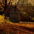 Autumn Walk by M a r i e B a r c i a