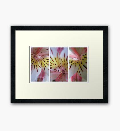 Lilium - Triptych Framed Print