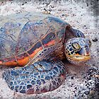 Cute, fun Hawaii sea turtle relaxing on the beach by Luceworks