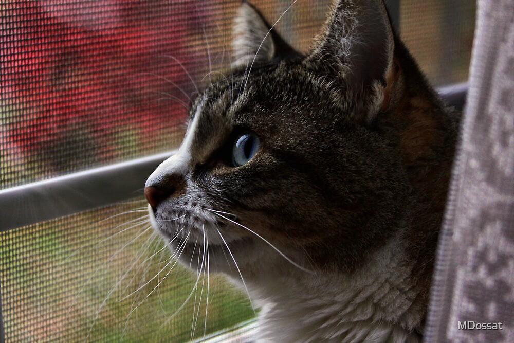 Watching by MDossat