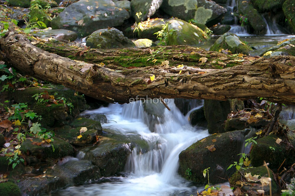 Fallen Tree at Waterfall by efphoto