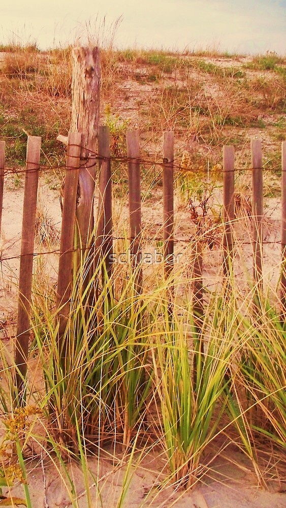 Beach Dune fence at Cape May NJ by schiabor
