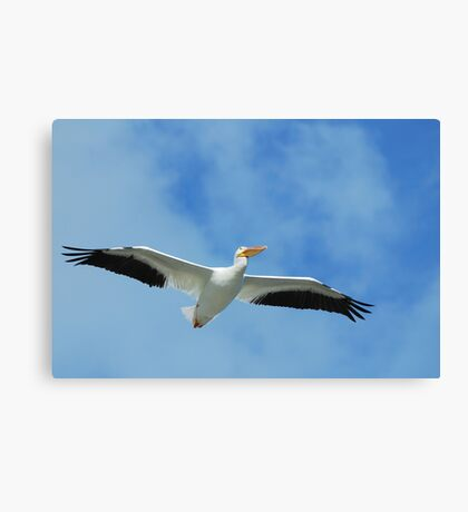 If I Could Fly With Them Canvas Print