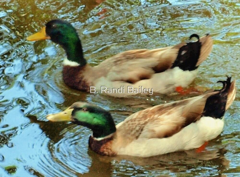 Duck pair by ♥⊱ B. Randi Bailey