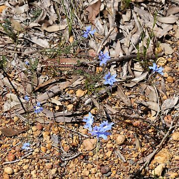 Blue Flower by STHogan