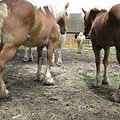 Like A Horse's Ass by SpaceKace