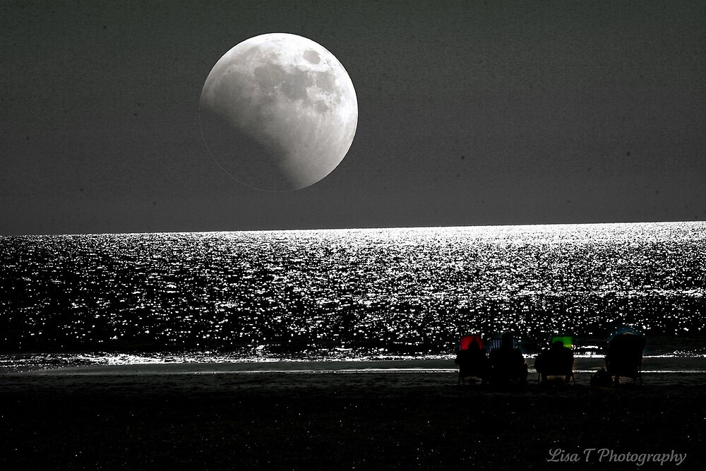 Moon Watching by Lisa  Trans