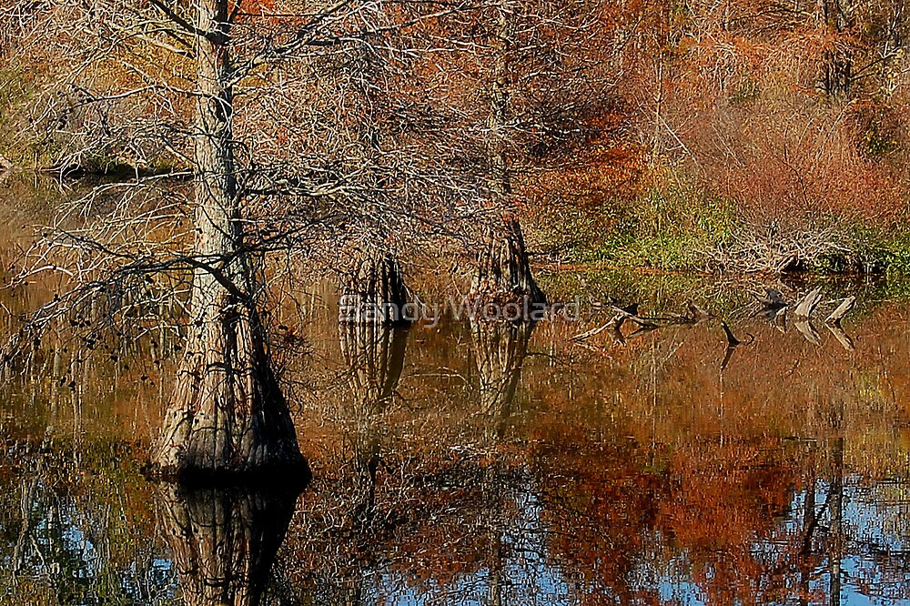Bayous of Virginia by Sandy Woolard