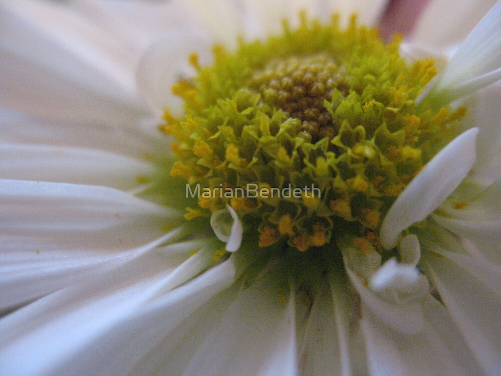 Magnified Daisy Heart by MarianBendeth