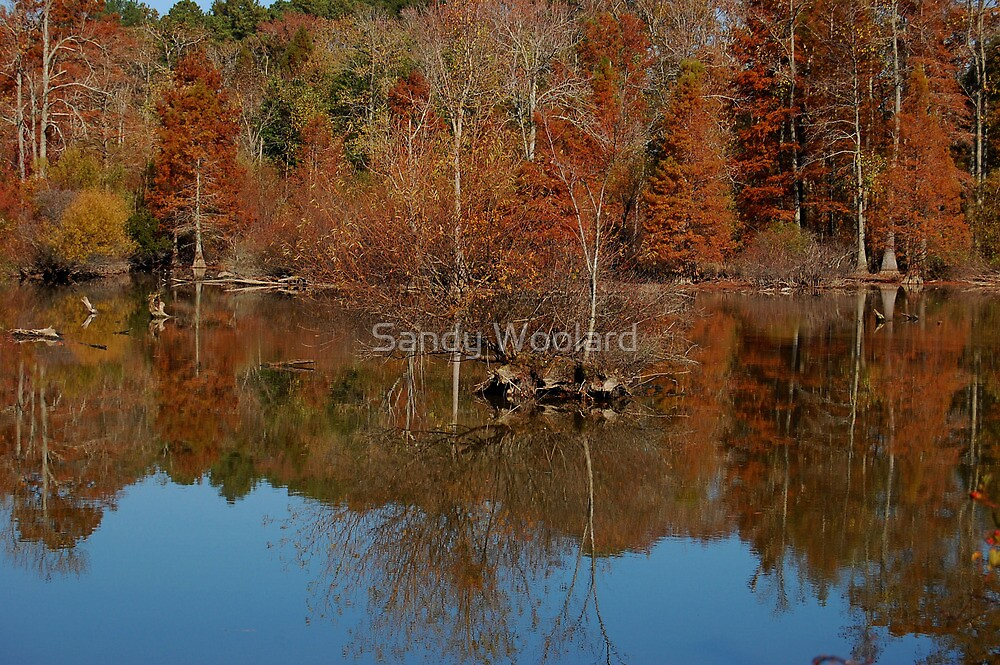 Colorful Reflections by Sandy Woolard