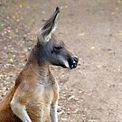 Red Roo by Liza Yorkston