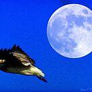 Moon Bird by Lisa  Trans