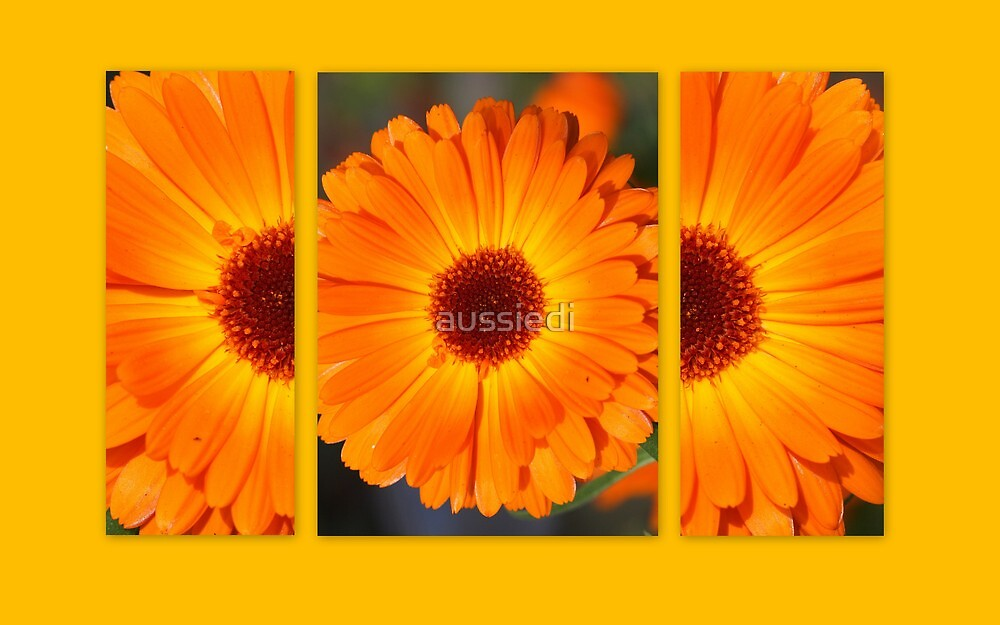 Marigolds in my Garden by aussiedi