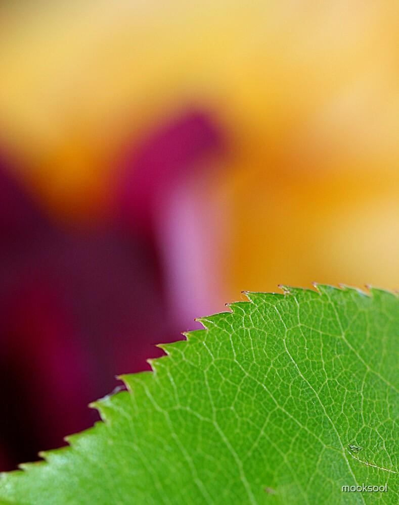 Leaf edge by mooksool