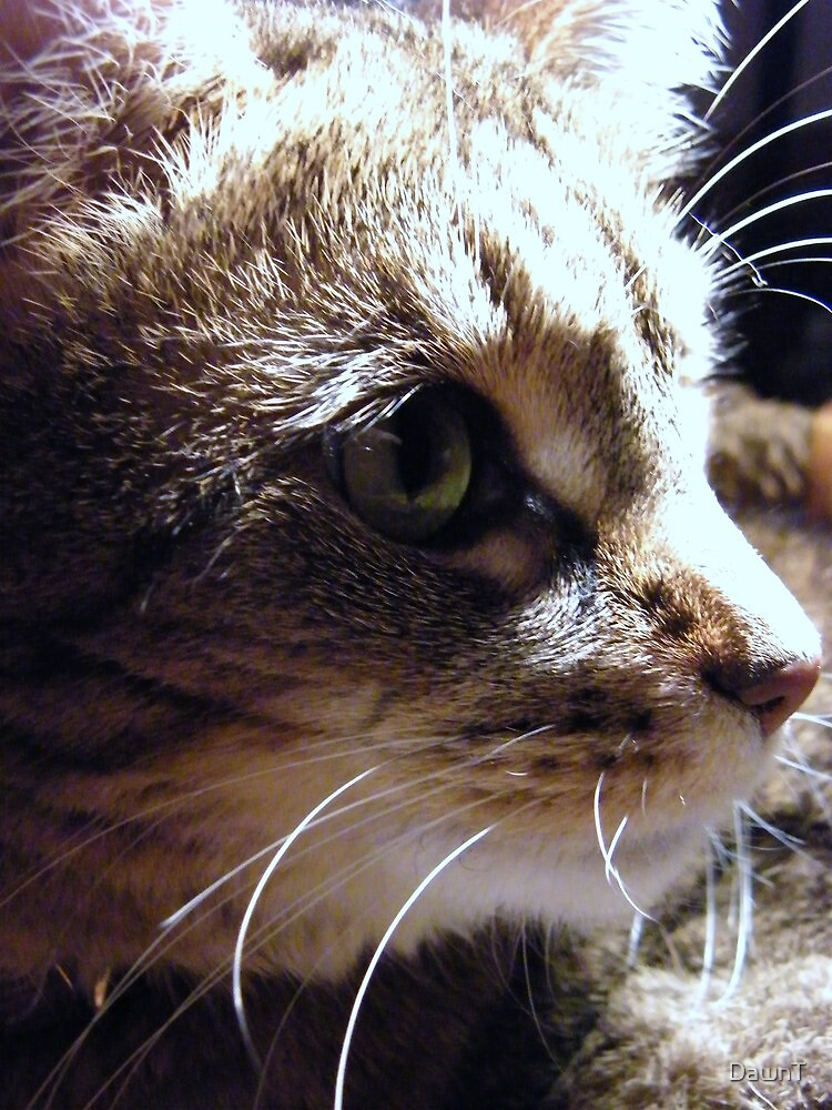 Dottie - Momma Kitty's Daughter by DawnT