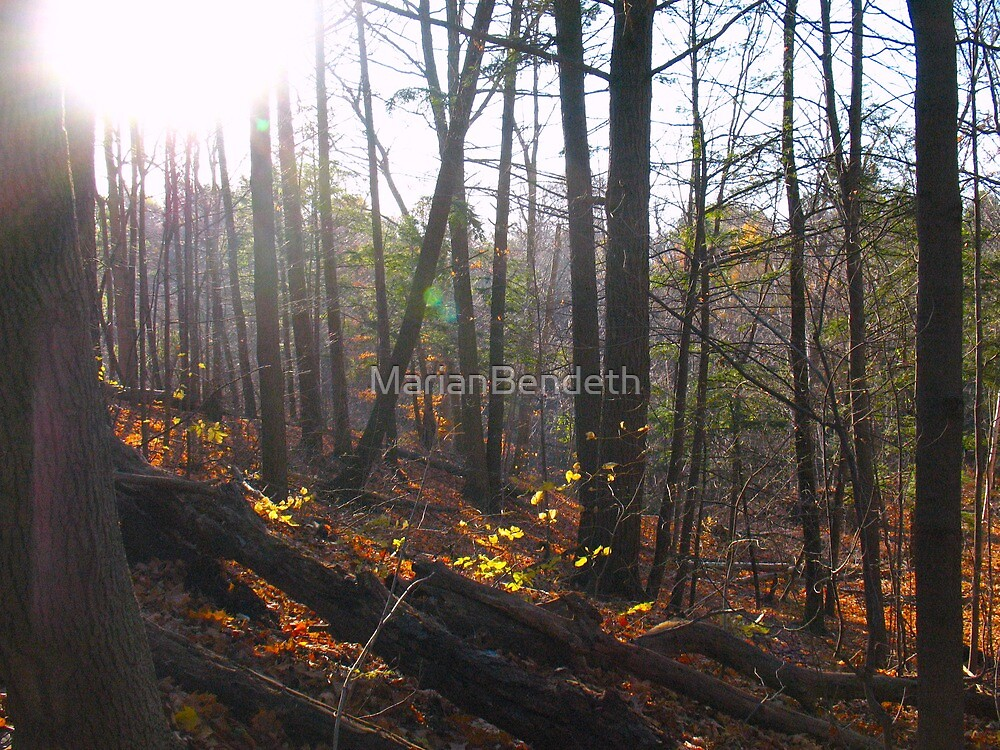 The Rays in the Forest by MarianBendeth