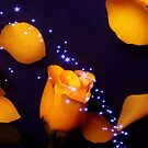 Orange Rose With Blue Stars by hurmerinta
