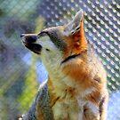 Feeling Foxy by Chappy