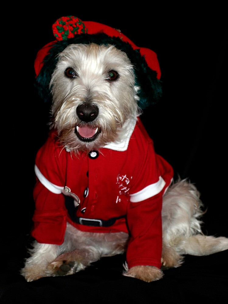 Bella is Santa's little helper by Pascal and Isabella Inard