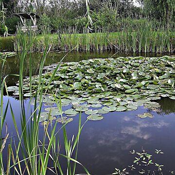 Dumpy pond ... ;-) by voelzis