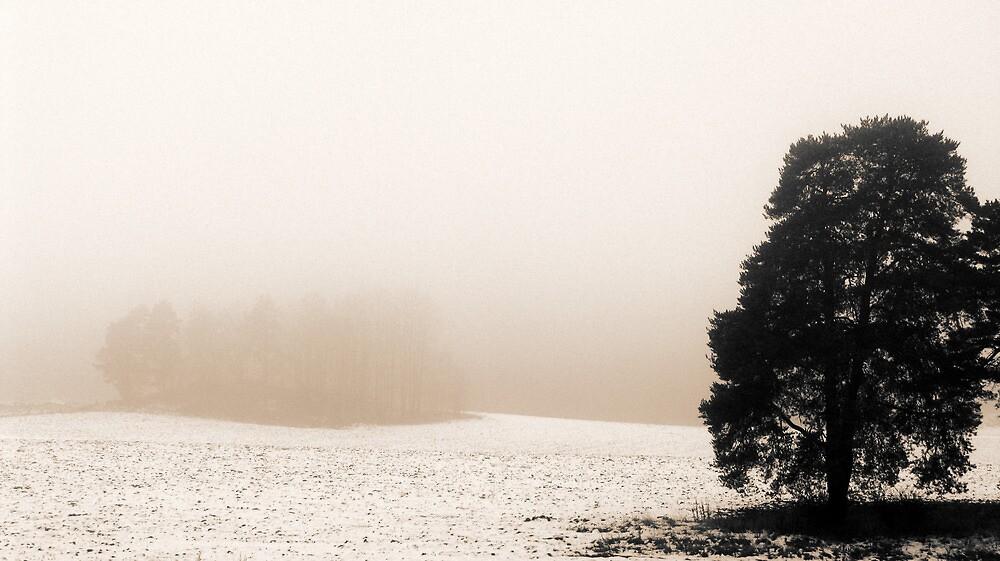 8.11.2009: November Landscape by Petri Volanen