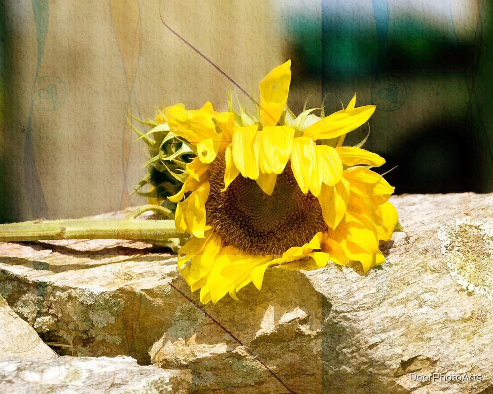 Sunflower in Texture Mode by DeerPhotoArts