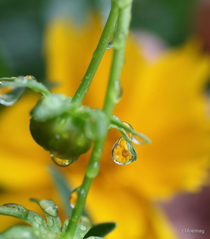 """""""Daisy Drop"""" by chloemay"""