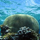 The Mind of the Reef by Reef Ecoimages