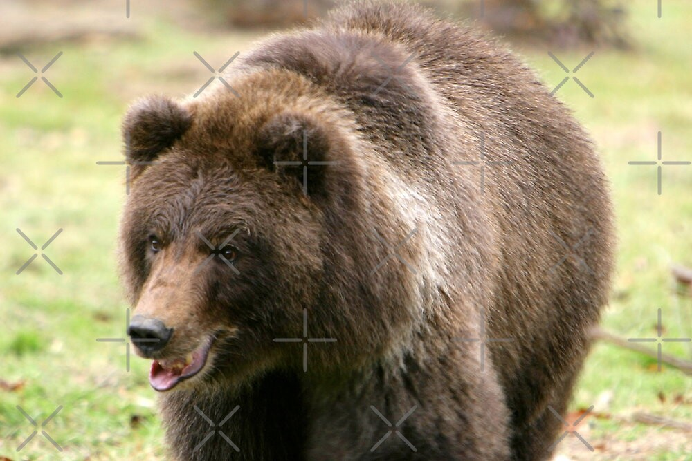 Grizzly on the Run by Lisa Putman
