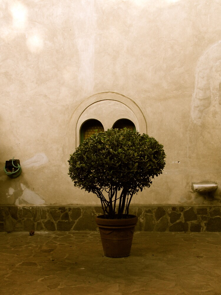 Lonely little potted tree by Christian Langenegger