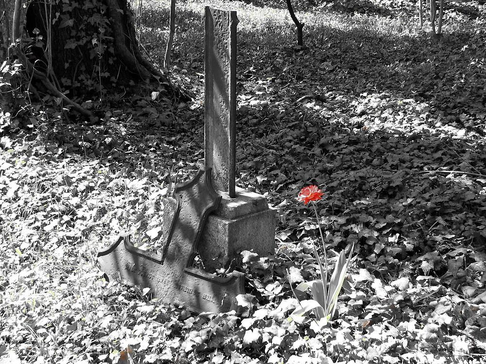 Broken cross and poppy by Christian Langenegger