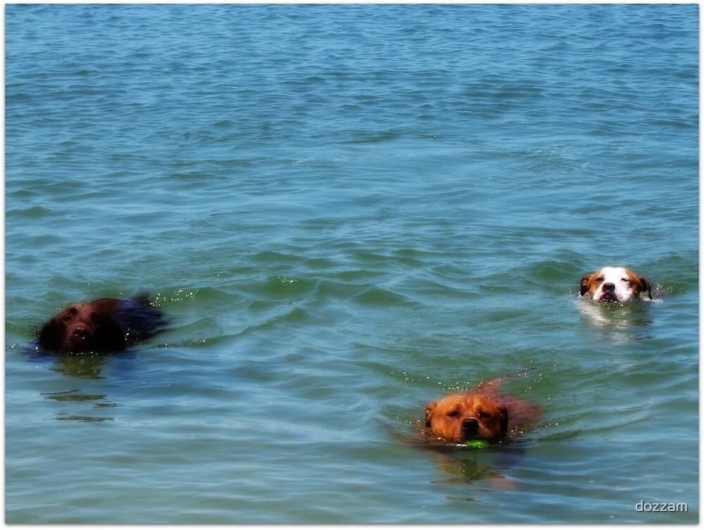 Dog Paddle by dozzam