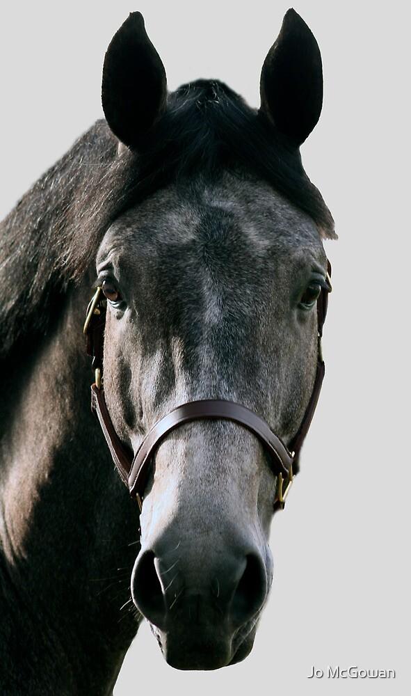 Grey horse portrait by Jo McGowan