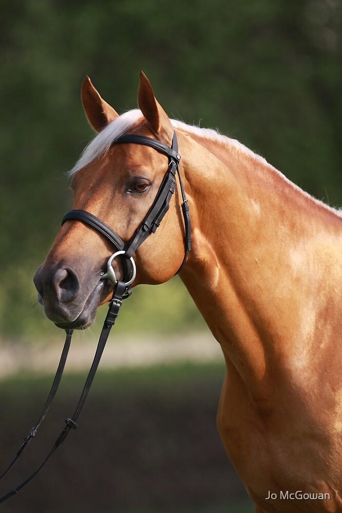 Palomino stallion by Jo McGowan