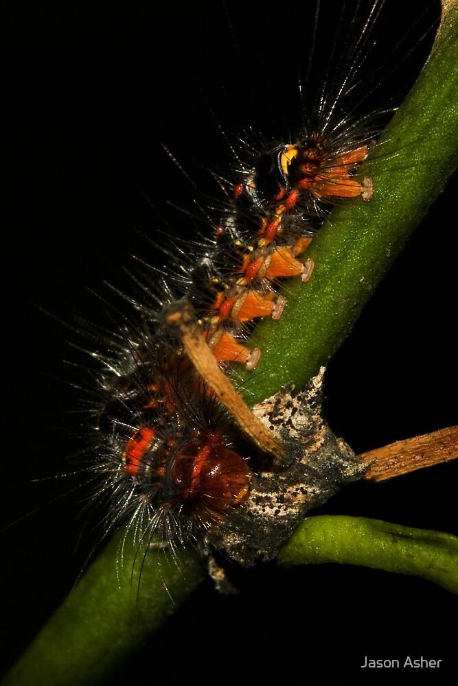 Spitfire Caterpillar by Jason Asher