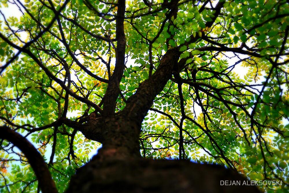 Tree by DEJAN ALEKSOVSKI
