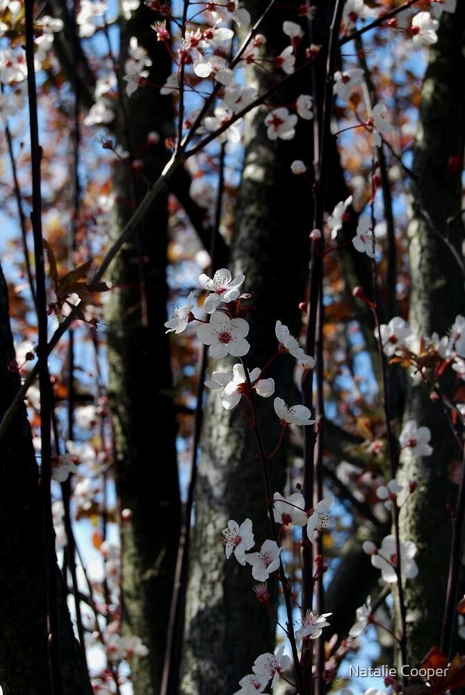 Sakura I by Natalie Cooper