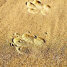 Paw Prints in the Sand by bartlehalpin